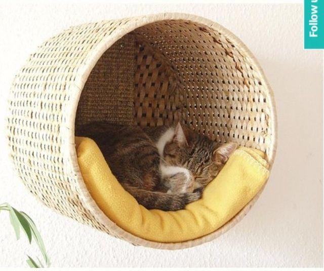 cosas-para-gatos-10