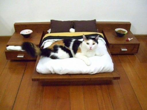 cosas para gatos 12