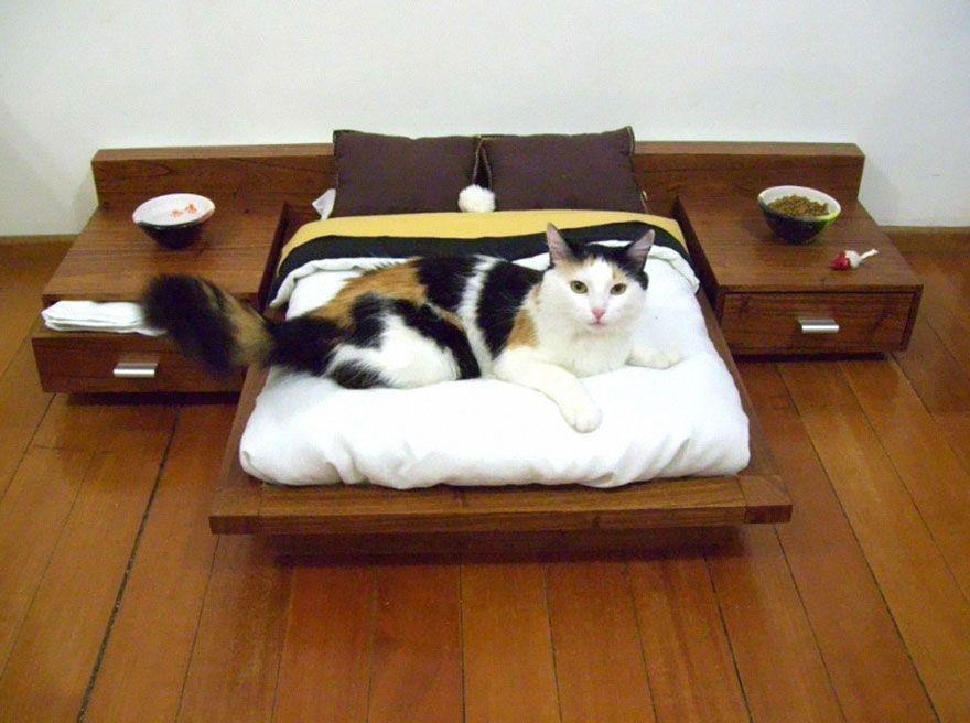 cosas-para-gatos-1
