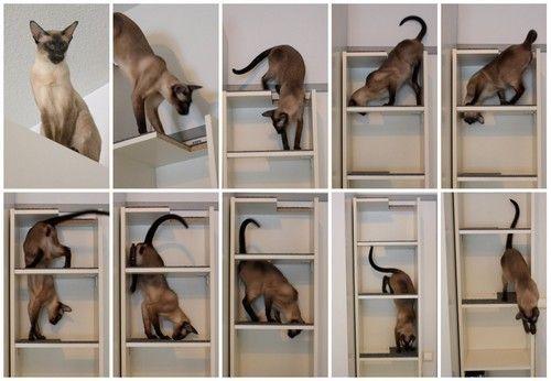 cosas-para-gatos-14