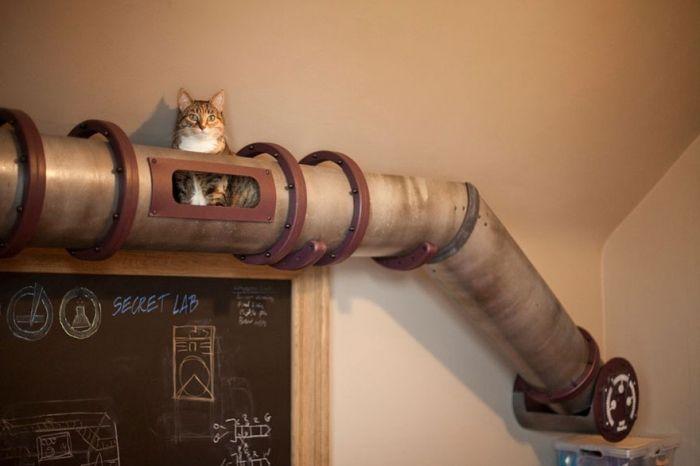 cosas-para-gatos-3