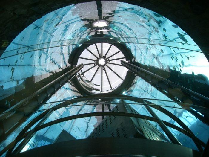 acuario-cilindrico-hall-hotel-radisson-06