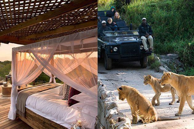 Vacaciones salvajes en plena reserva de leones