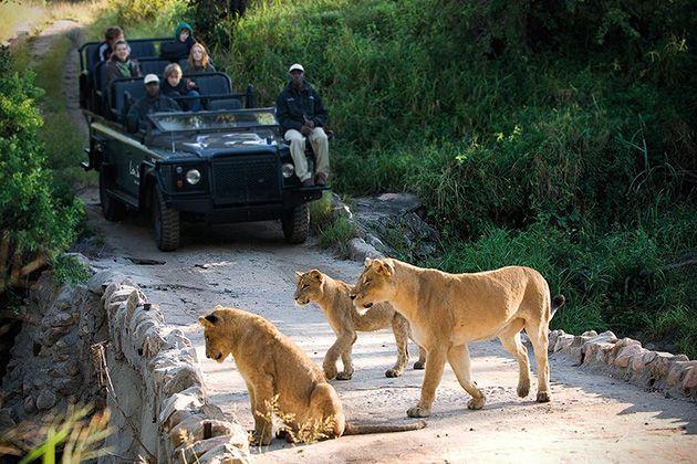 vacaciones salvajes reserva leones