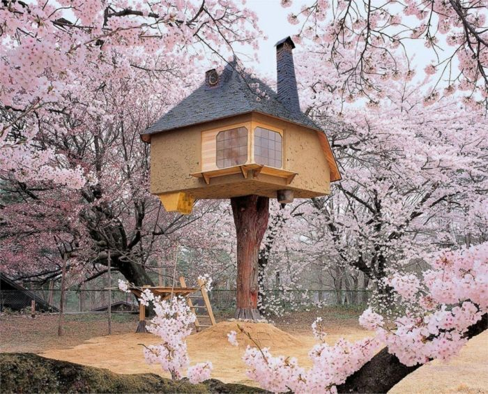 tiny house casa pequena construidaarbol arboles florecidos