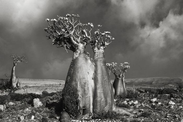 arboles-antiguos-beth-moon13