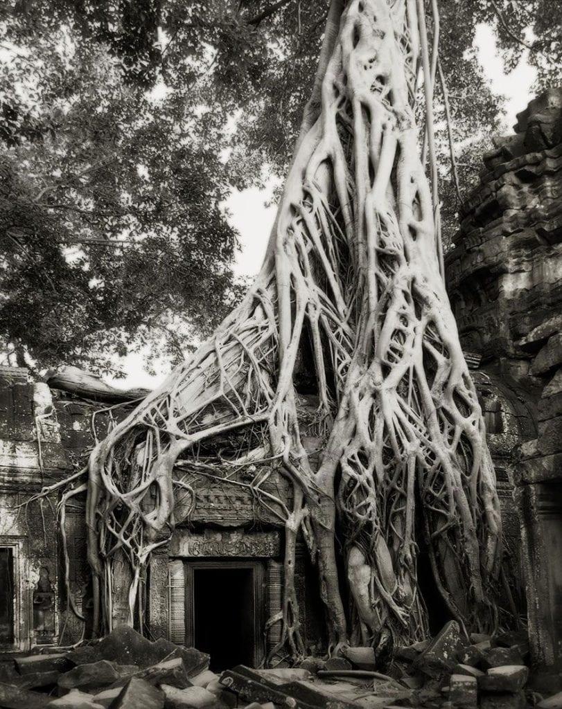 arboles-antiguos-beth-moon17