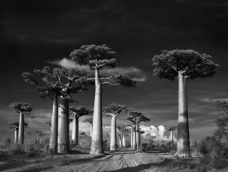 arboles-antiguos-beth-moon19