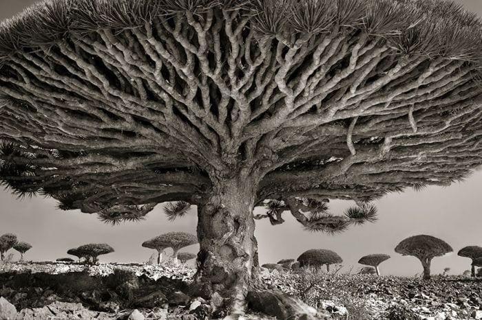 arboles-antiguos-beth-moon20