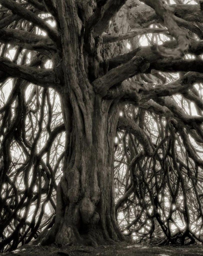 arboles-antiguos-beth-moon3