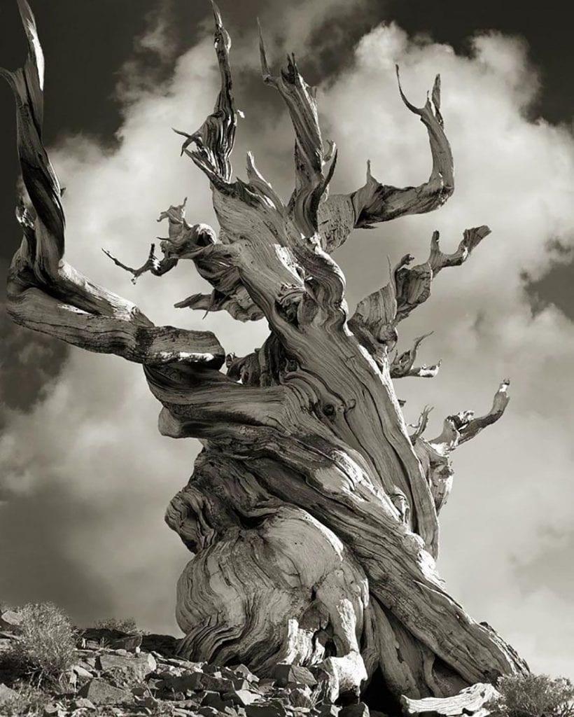 arboles-antiguos-beth-moon6