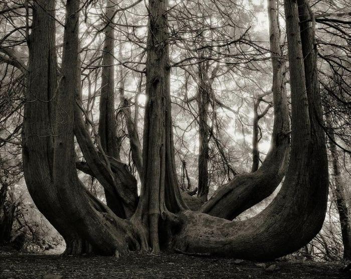 arboles-antiguos-beth-moon7