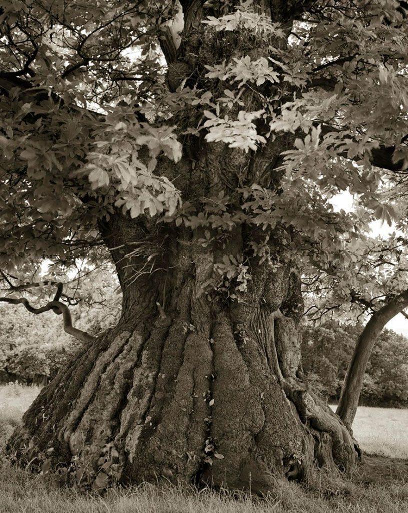 arboles-antiguos-beth-moon8