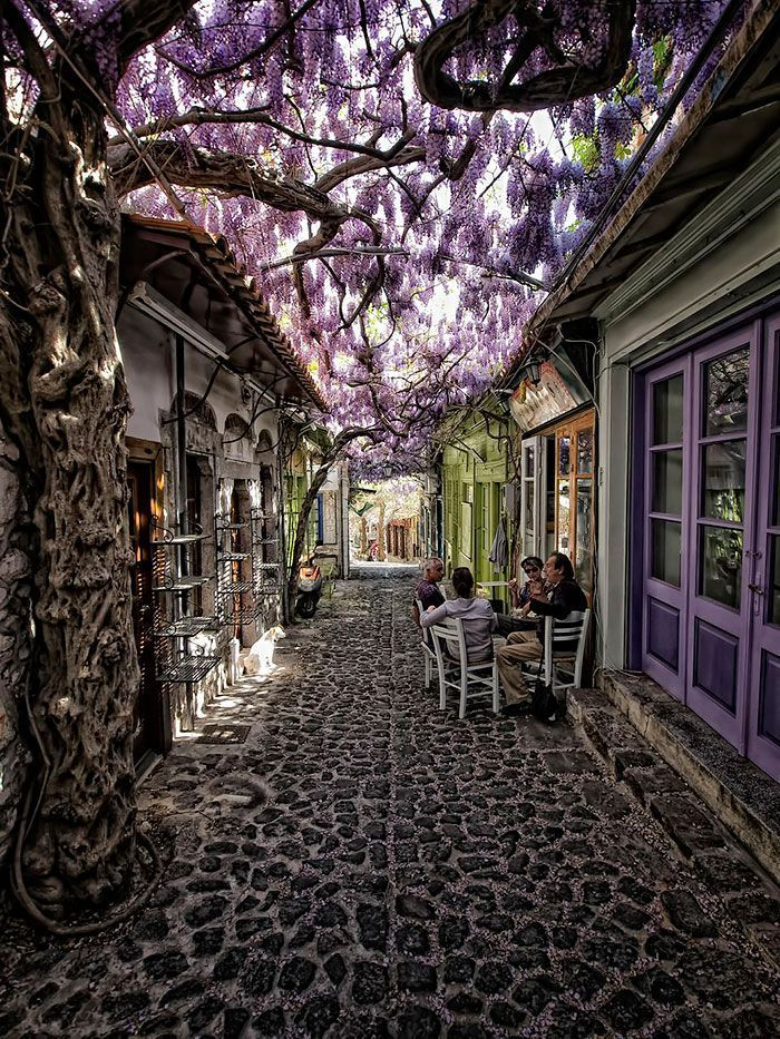 calles-flores01