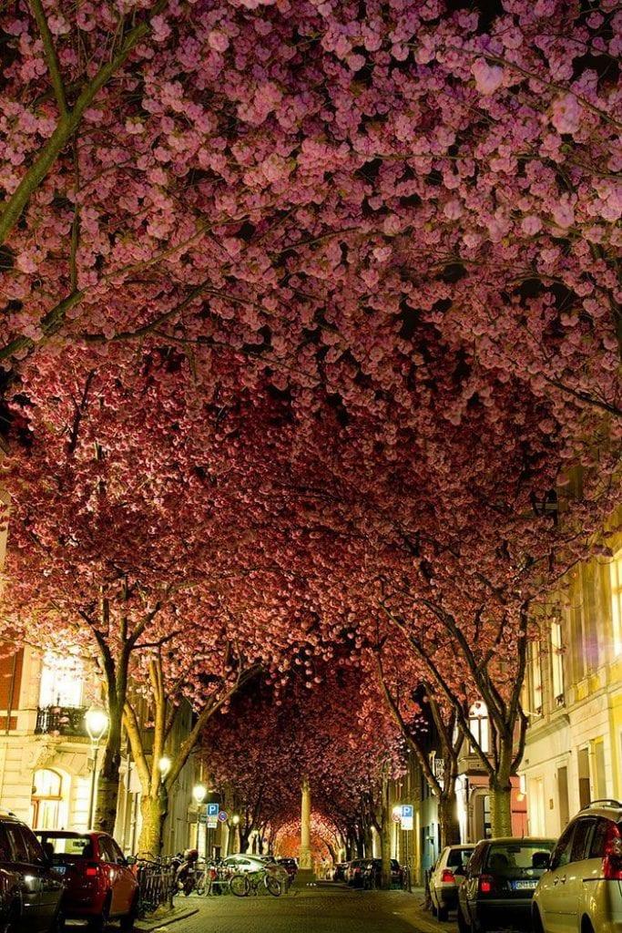 calles-flores02