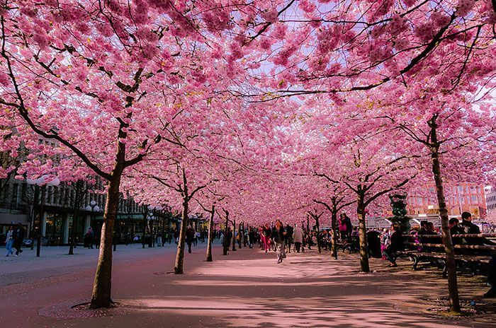 calles-flores03