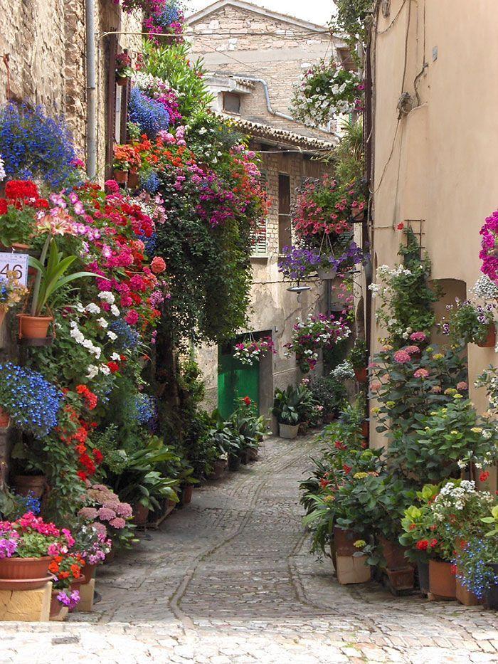 calles-flores09