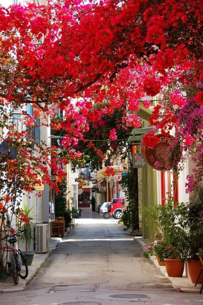 calles-flores13