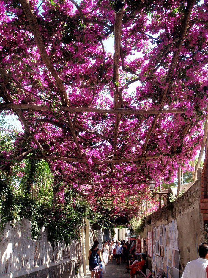 calles-flores14