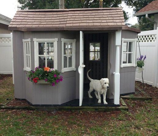 23 incre bles casas para perros que podr an superar a la for Piscinas para perros baratas
