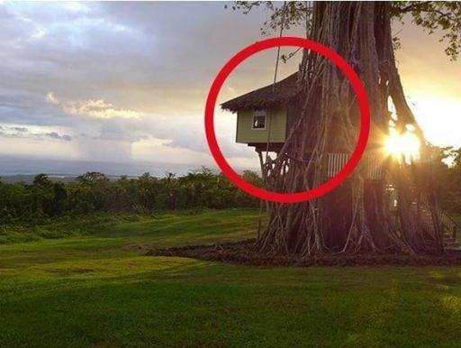 casa arbol destacada