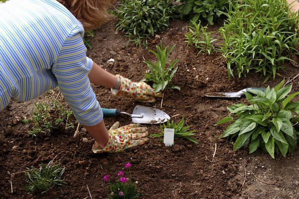 usos del vodka, acaba con las malas hierbas del jardin