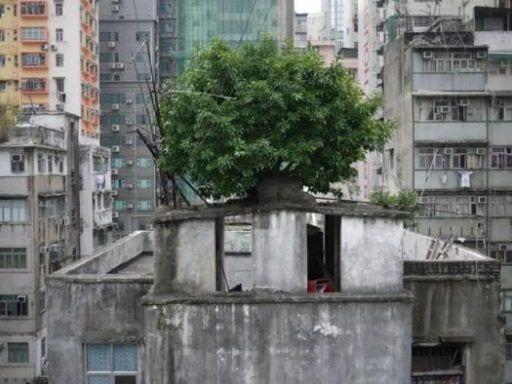 arboles china 6