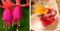 flores comestibles destacada