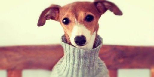 ropa perros 10