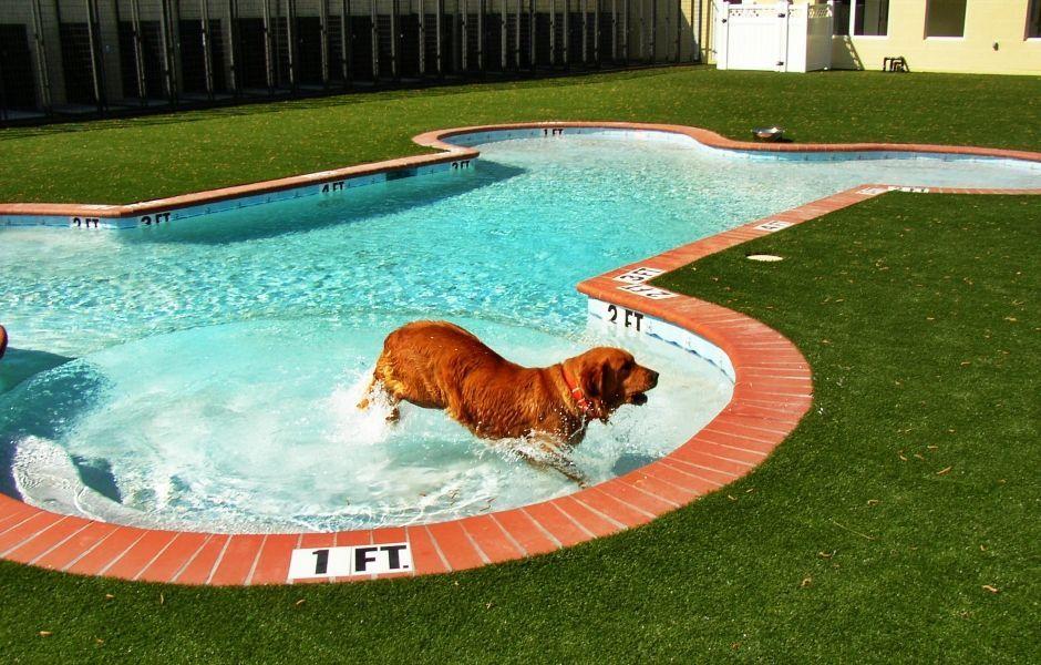 Las piscinas con los dise os m s originales que hayas for Formas para piscinas