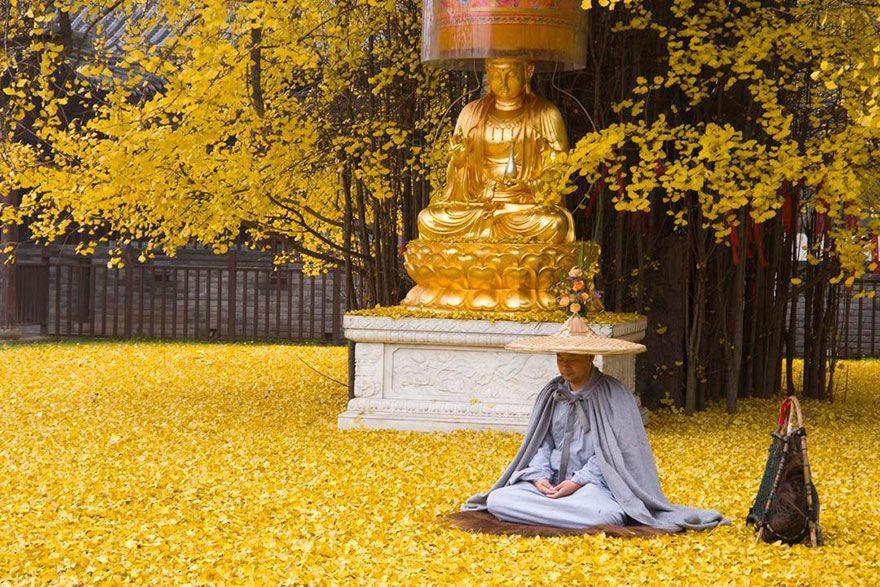 arbol-milenario-templo-budista-03