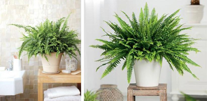 8 Plantas De Interior Tan Resistentes Que No Vas A Poder