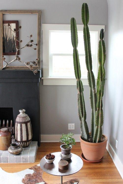 8 plantas de interior tan resistentes que no vas a poder for Cactus para interior
