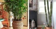 plantas interior destacada