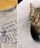 tienda casa gato 768x432 1