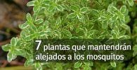 plantas mosquitos