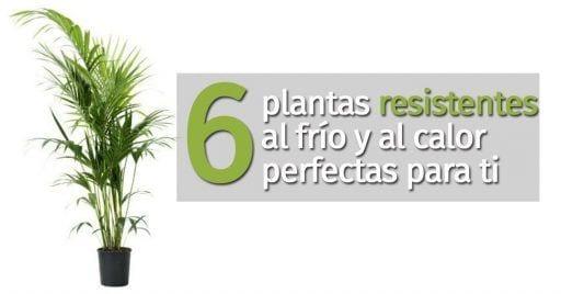 plantas resistentes destacada