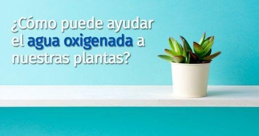 usos agua oxigenada plantas destacada