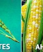 modificacion comida destacada