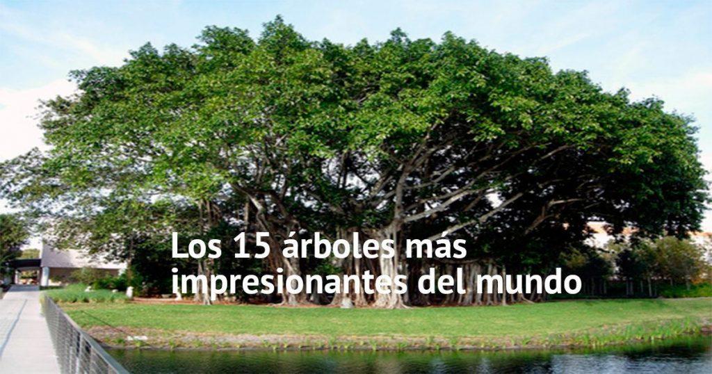 Los 15 árboles más impresionantes del mundo demuestran que la naturaleza es capaz de cualquier cosa