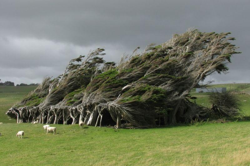 17 maravillosos árboles que demuestran que la naturaleza sigue siendo el mejor diseñador