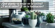 plantas interior casa destacada