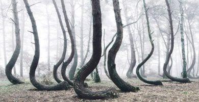 bosque-torcido