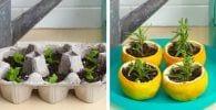 cultivar plantas