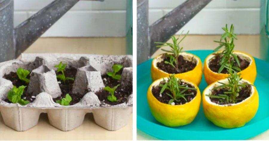 Consigue tu propio jardín en casa usando estos 4 maceteros biodegradables