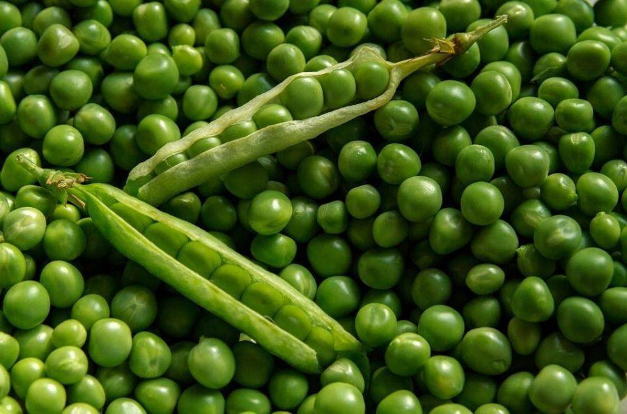 guisantes vegetales que engordan