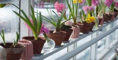 plantas-duracion-destacada