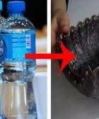 cesta pan botella destacada