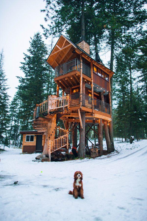 beneficios-criterios-construccion-casa-ecologica-madera-bosque-nieve-perro