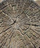 tree 2133714 1920